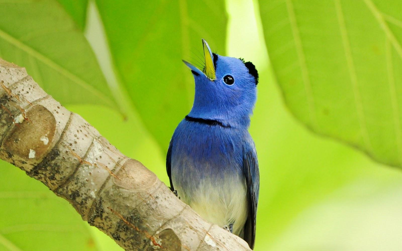 Gorgeous_birds1
